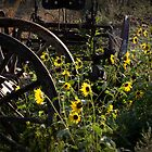 Sunflowers and Tractor by GesturesPhoto
