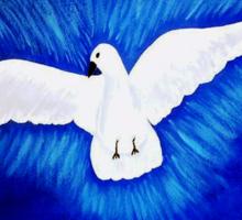 White Dove .....Peace for all........... Sticker