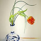 Tulip by Gaby Schrott