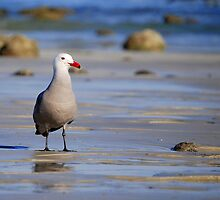 A Bad Company Gull by LjMaxx