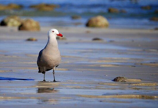 A Bad Company Gull by LjMaxx