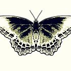 Butterfly by Jean Gregory  Evans