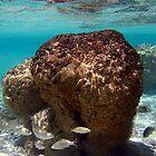 """Stromatolites in Hamelin Pool"" Shark Bay, Western Australia by wildimagenation"