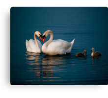 Swan Heart Canvas Print