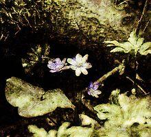 Endgraving Forest 1 by Yevgeni Kacnelson