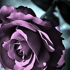 Never 'Just' a rose by SerenityPhoto