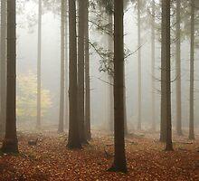I dreamt of a little beech-tree in the mist by jchanders