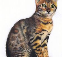 Bengal Kitten by Karen  Hull