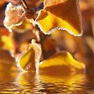 Liquid Gold by ChereeCheree