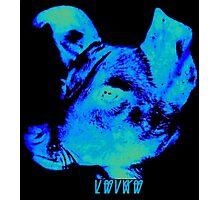 Sunwatcher: Laika Blue Photographic Print