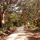 Boranup Forest by georgieboy98