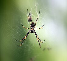 Spider underbelly! by caz60B