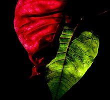 Indoor Jungle by Richard Hamilton-Veal