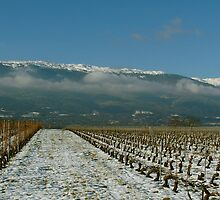 swiss vineyard under the snow ... by anisja