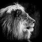 A study of a King by Steve Randall