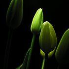green by Gaspare De Stefano
