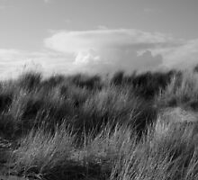 Dune Grass by fish68