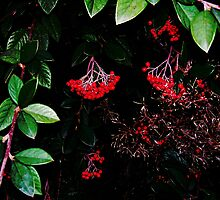 Red At night.. by WaleskaL
