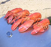 lobsters by Marlene  Bowering
