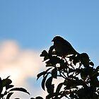 Tree Tops by BluAlien