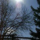 Winter Starring................. by Larry Llewellyn