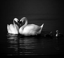 Swan Heart B&W by Theodore Black