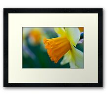 One thousand and one yellow daffodils Framed Print