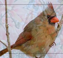Cardinal in Japanese Magnolia by Bonnie T.  Barry
