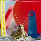Grasshopper Smile by sunsetgirl