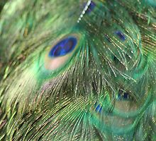 Fluff your feathers by Wendy Skinner