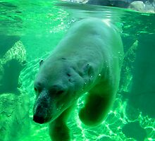 Polar Bear by sleza69