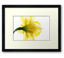 Sun Soaked Daffodil Framed Print