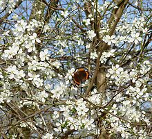 Butterfly on a Tree by sleza69