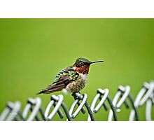 Hummingbird on a Fence Photographic Print
