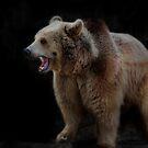 Brown Bear by Squealia