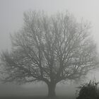 Oak Tree in the Fog by Pamela Jayne Smith