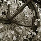 wheel of fortune by J.K. York
