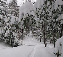 Walking Through a Snowy Forest...  by maxy
