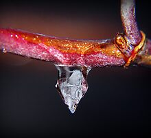 Diamond Ice by Gayle Dolinger
