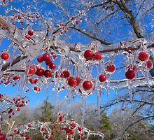 Icy Beauty by Mitchell Grosky