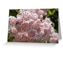 Mountain Laurel  (Kalmia latifolia) Greeting Card