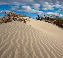 Mesquite Sand Dunes by Nickolay Stanev