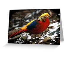 Golden Pheasant Greeting Card