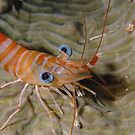 Prawn Portrait by Erik Schlogl