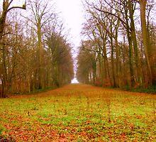 Poplars near Agincourt (Pronounced Azincourt here in France) by Rusty  Gladdish