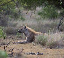 Hyena Awaits by Tobin Rogers