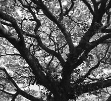 Branches of life. by Hannah Fenton-Williams
