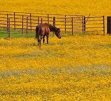 Field of Sunshine by Modified
