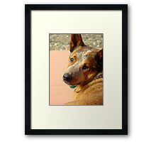Murphy ~The Cow Dog Framed Print