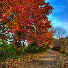 Fall Path by Jennifer Rinaldi